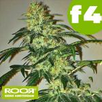 RooR Seeds f4 Grand OG