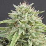 Seedism Seeds Hippie Killer